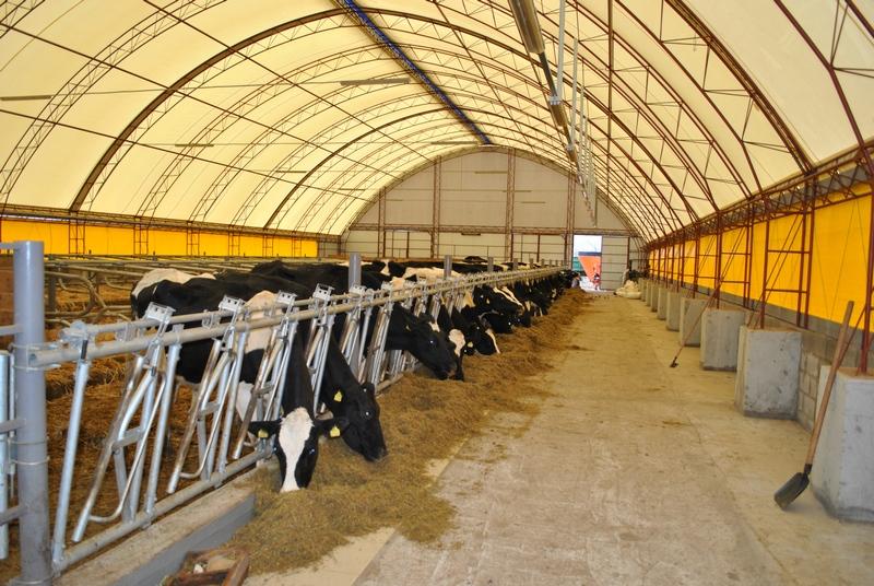 корова ферма